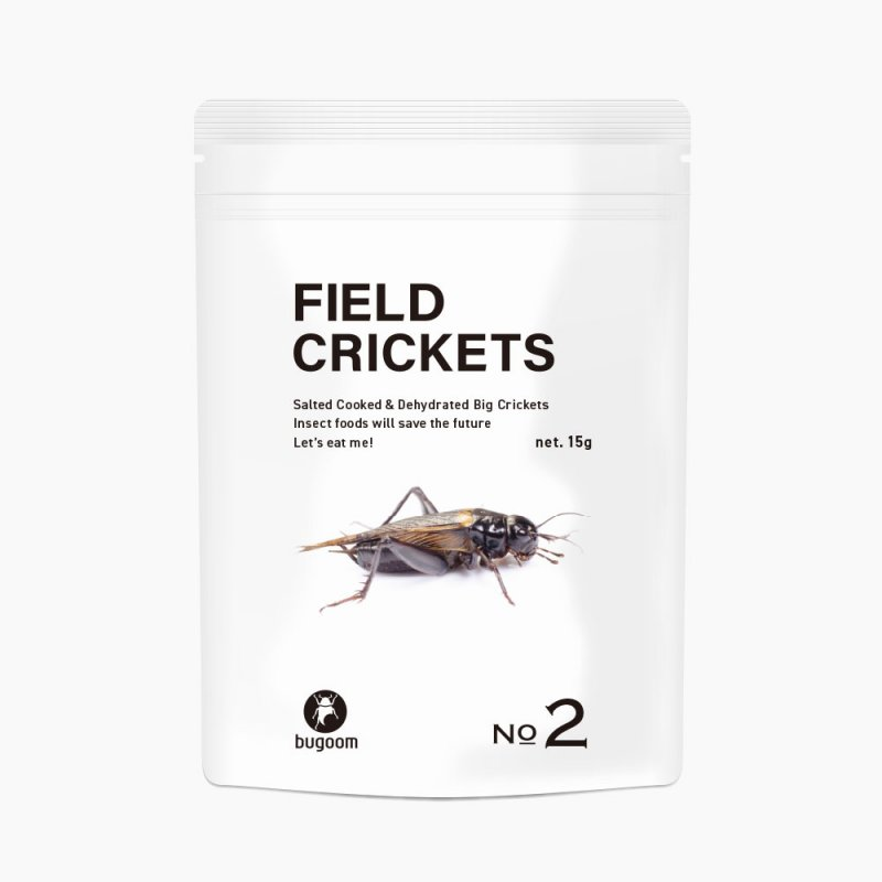 FIELD CRICKETS【No.2】