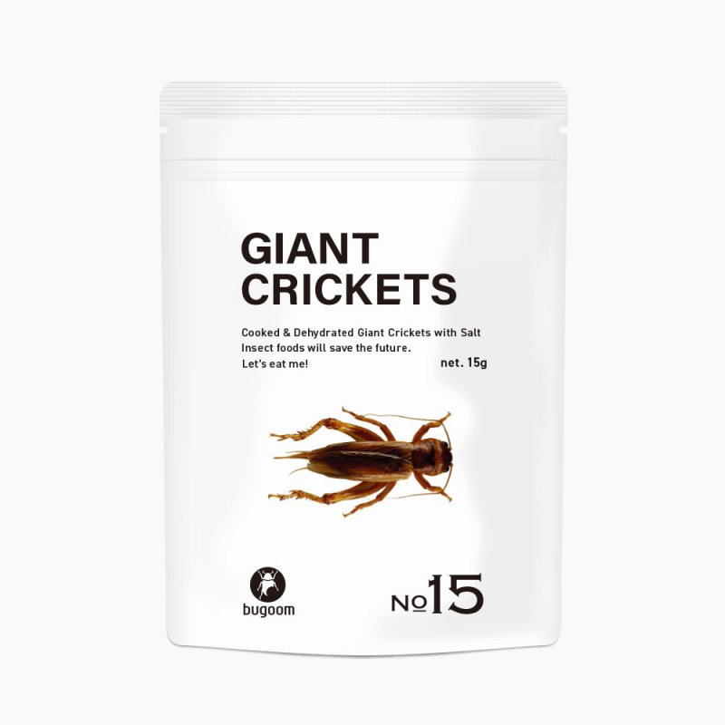GIANT CRICKETS【No.15】
